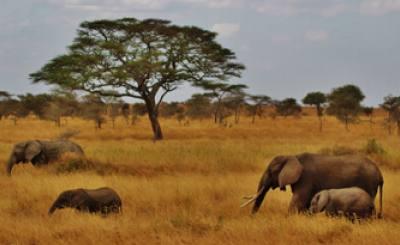 Safari and Trekking in Tanzania