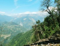 Green Nature and Annapurna South from Forest Camp
