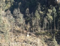 langtang valley trekking himalayan forest