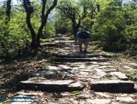 dhampus sarangkot trekking trail