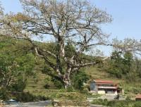 dhampus-sarangkot-trekking-trail