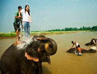 elephant bathing in chitwan national park