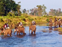 jungle safari in chitwan national park trekking trail nepal