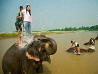 elephant bathing of chitwan national park