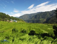 green field of baglung trekking