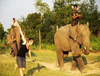 guest enjoying with elephant