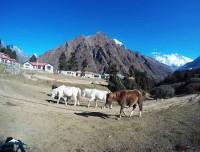 Horse On Amadablam Trekking