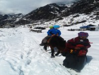 Little Trekkers in Langtang Valley Trekking