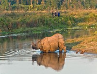 one horn rhino in chitwan national park