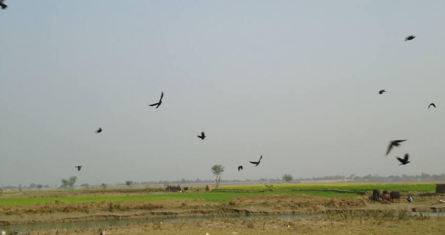 migrated birds of koshi tappu wildlife reserve