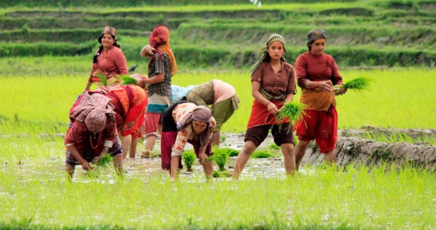 rice planting festival nepal