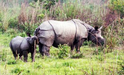 chitwan national park activities